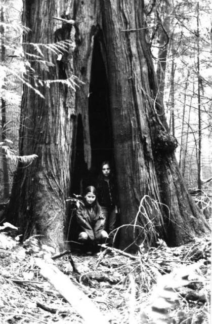esquimalt-lagoon-magna-carta-tree