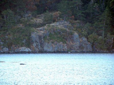 esquimalt_lagoon-12