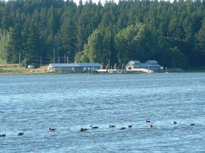esquimalt_lagoon-3